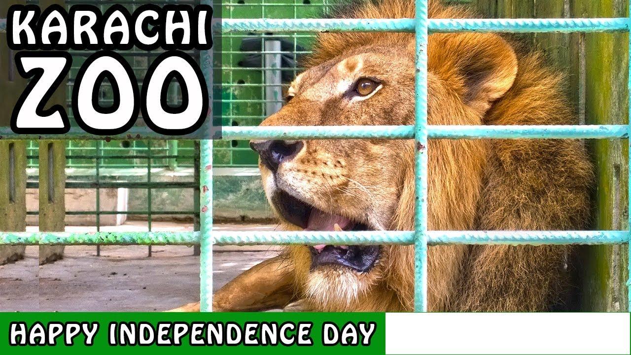 Karachi Zoo Animals | Karachi Zoological Garden | Happy Independence Day  14th August
