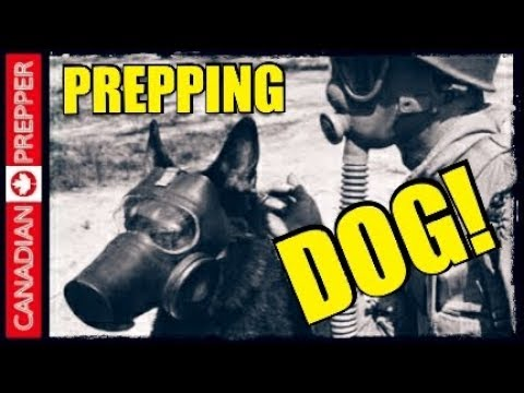 The Ultimate Prepping/ Survival Dog!