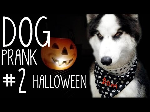 DOG Prank#2 - Halloween Edition