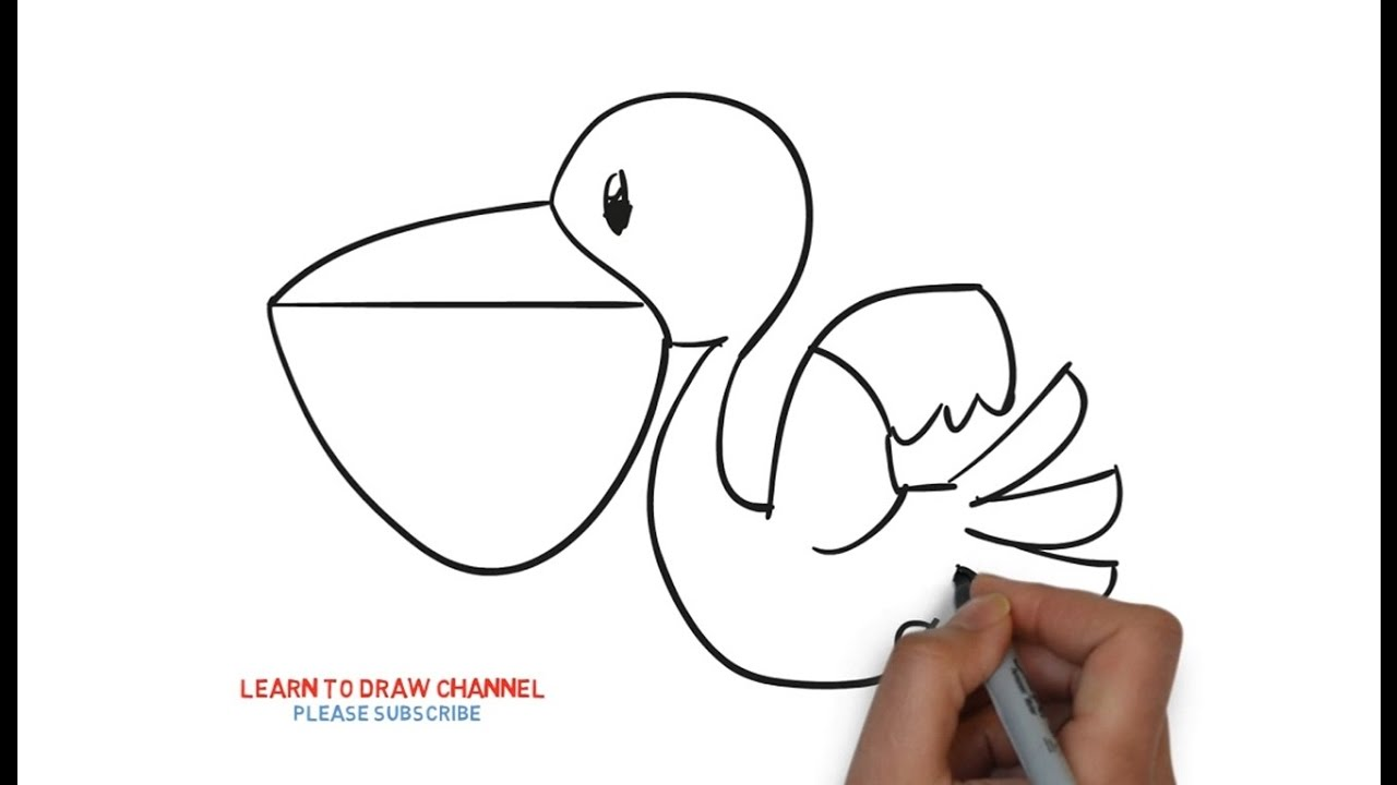 Easy Step For Kids How To Draw a Pelicans - YouTube