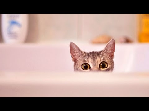 Cats loving Bath Time #43