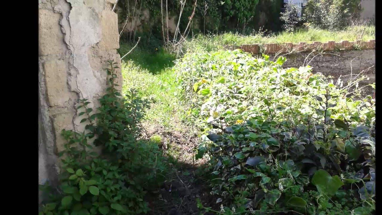 Sistemare Giardino Di Casa come sistemare un giardino trascurato | fai da te mania
