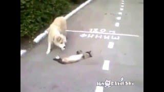 Прикол: Собака думает, что кот мёртв