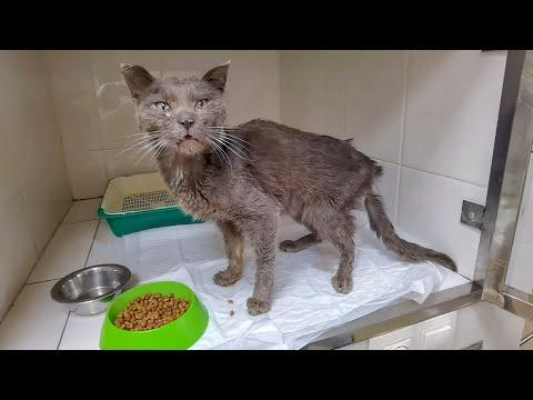 Вопрос: Почему кот выросшей на улице постоянно требует ,чтобы его выпустили?