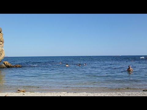 Видео с мамои на море