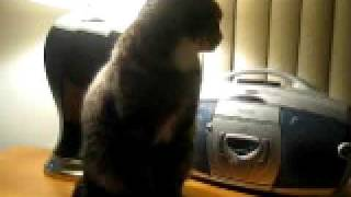 Cat farting!! TOO FUNNY!!