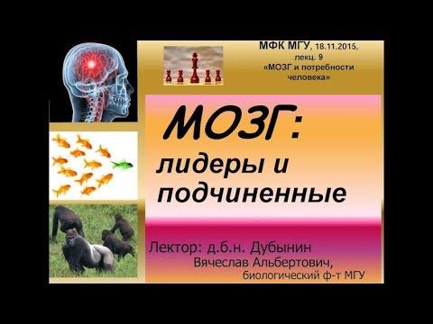 Мозг: лидеры и подчинённые - Вячеслав Дубынин