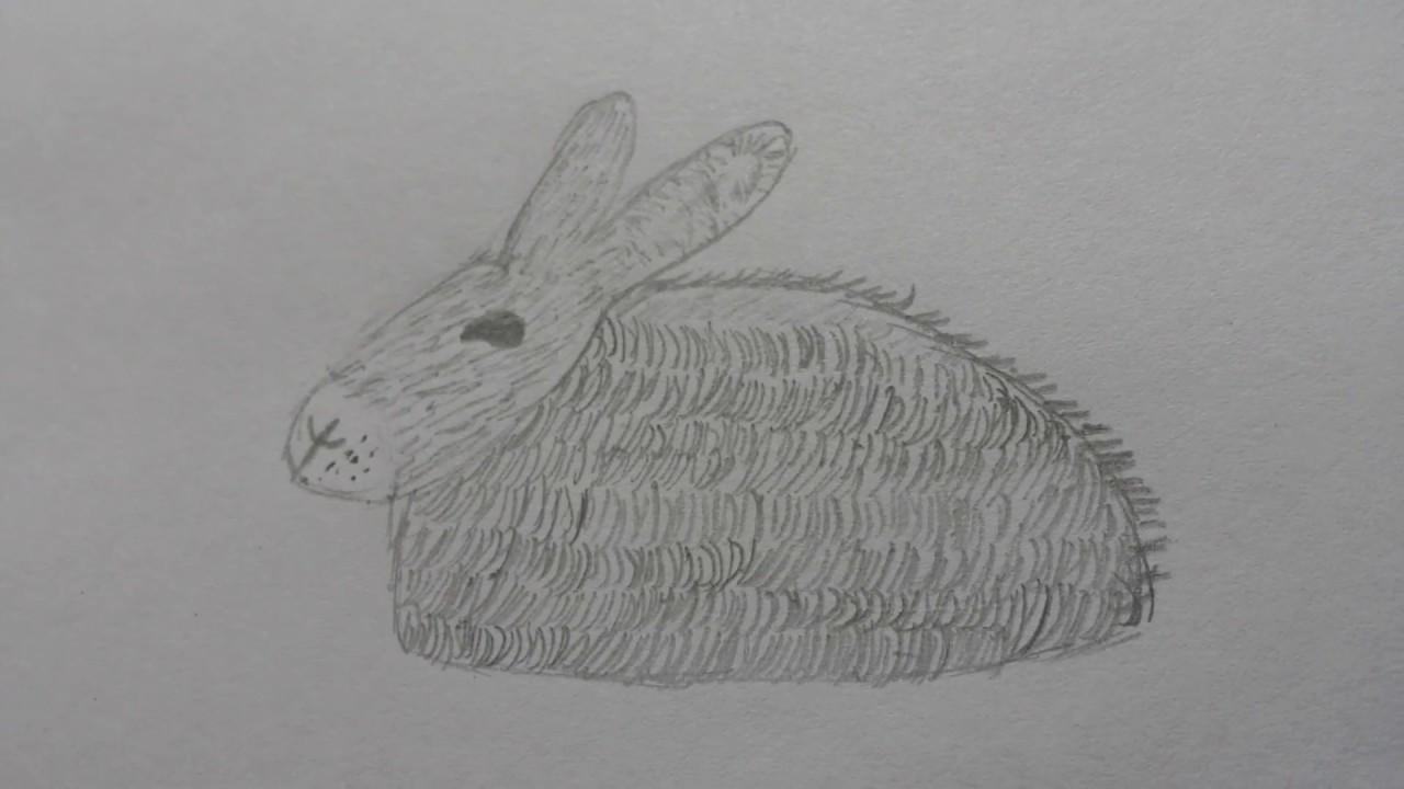 Comment dessiner un lapin r aliste facile youtube - Lapin a dessiner ...