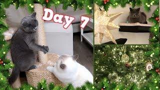 CAT FIGHT DRAMA & XMAS TREE DECORATING!   VLOGMAS DAY 7 - CHRIS & EVE