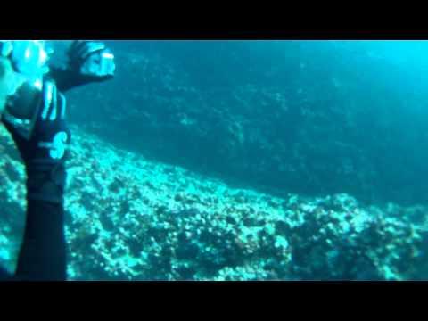 Sharks, Ray and turtles in the Galapagos island of Santa Cruz