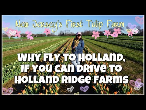 NEW JERSEY'S FIRST TULIP FARM | Ann Daniel
