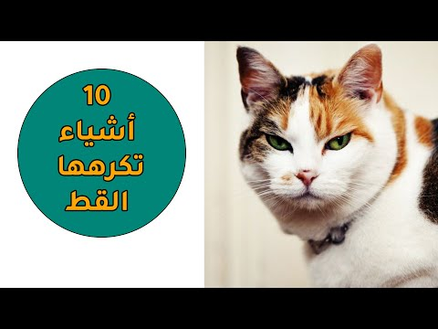 أكثر 10 أشياء تكرهها قطتي ، يجب أن تجتنبوها