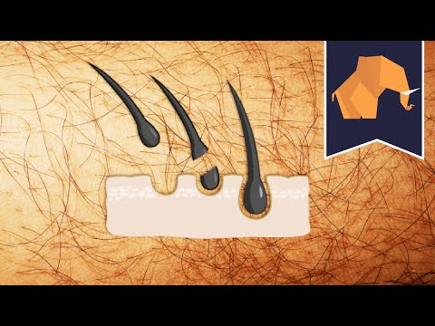 How to make pubic hair grow back faster