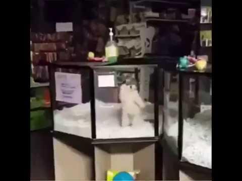 Happy dog dancing loop