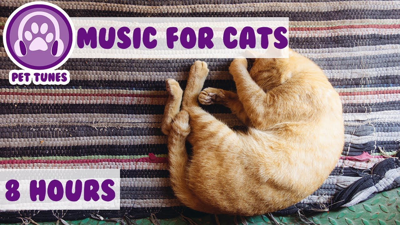 Nervous Cat Music! Soothing Music to Calm Hyperactive Cats, Songs to Help  with Anxiety and Sleep! 🐈 - YouTube