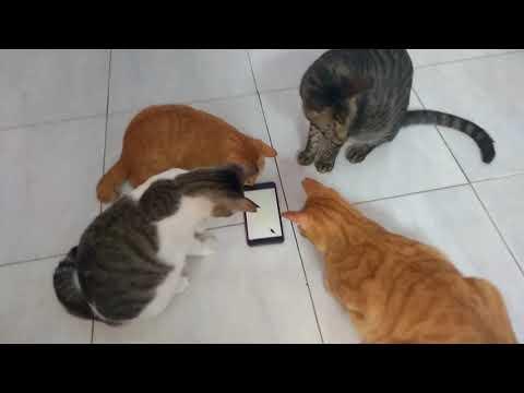Liz - How to entertain cats!