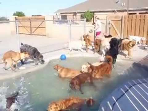 Doggy Daycare - Grand opening of bone-shaped puppy pool!