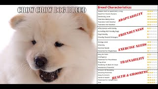 White Chow Chow   Facts about Chow Chow Dog Breed