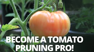 How to Prune Indeterminate Tomatoes & Identify Suckers