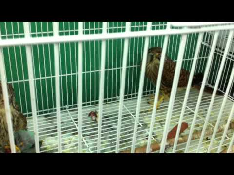 Mina Animal Market - Abu Dhabi - Birds