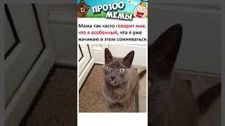 Приколы и Мемы с Озвучкой  Смешные МЕМЧИКИ про Котов