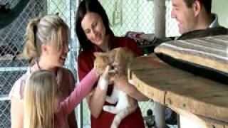 The Sydney Dogs & Cats Home