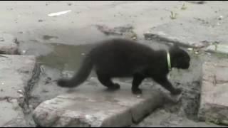 Весёлый котёнок 20 may 2016 kotik