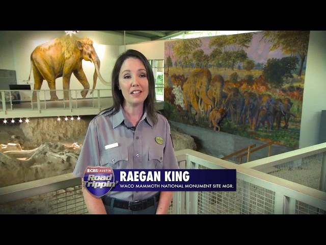 Road Trippin' Waco: Prehistoric Fun at the Waco Mammoth National Monument