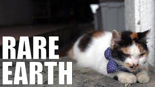 Should Japan Kill This Cat