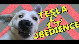 Dog Training: Tesla Demonstrates Obedience / Treniranje Pasa: Tesla Demonstrira Poslušnost