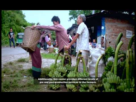 Empowered Lives: CHT Banana Farmers' Story of Success