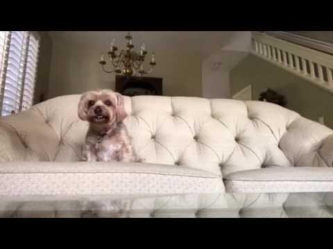 Hersheys crush(episode 1) reality dog TV show