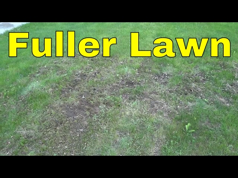 Fixing Bare Spots On The Lawn With Grass Seed-Getting A Thicker And Fuller Lawn