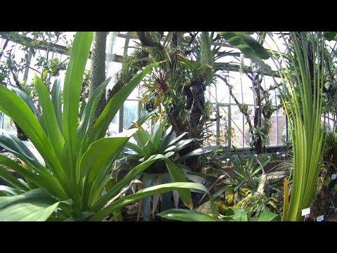 Tropische Pflanzen Botanischer Garten Berlin Mai 2017 - YouTube