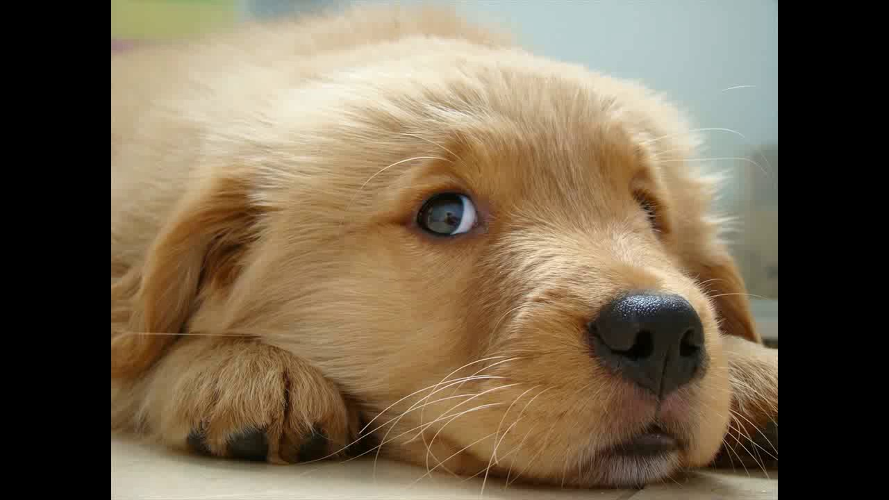 100 Cutest Puppies Youtube
