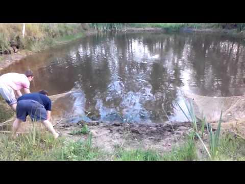 рыбалка бреднем видео бесплатно