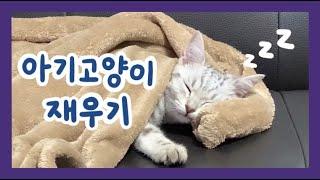 잠자는 아기고양이 힐링영상😴 | 고양이 재우기 | 아메리칸 숏헤어 | sleeping cat | 사냥왕 김백호