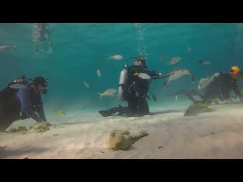 Grand Cayman 2018 | Grand Cayman Stingray City 2018