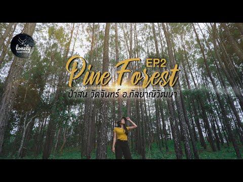 EP.2 Pine Forest 🌲 ป่าสนวัดจันทร์ กัลยาณิวัฒนา   เหงาไปด้วยกัน Lonely Together
