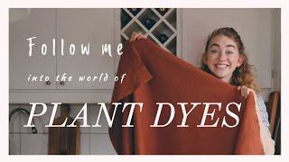 I Tried to Plant Dye with Walnut and Madder