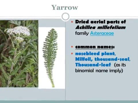 herb -2 lecture for second year pharmacy students by Dr. Abeer Sayed Moawad