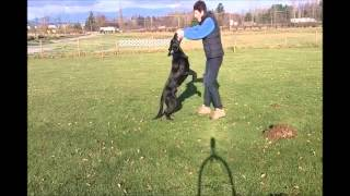 Competition Obedience Dumbbell Games