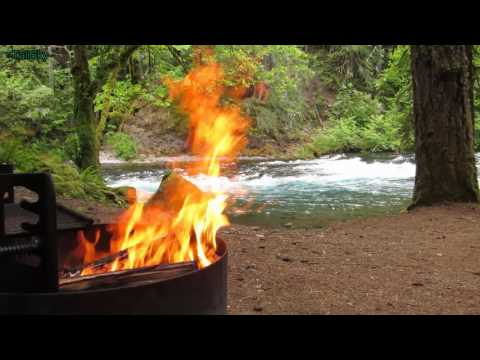 Relaxing Campfire by a River Deep in the Forest - 3 hrs