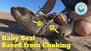 Baby Seal Saved from Choking