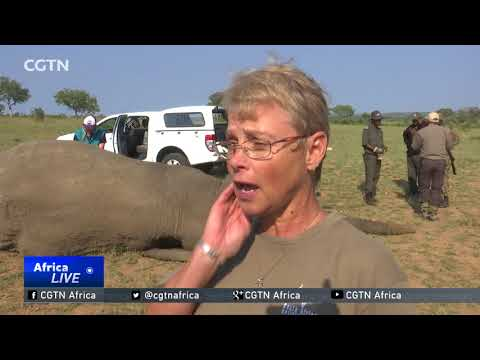 South African conservationists worried about spike in elephant poaching