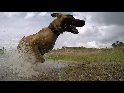 #GoodBoyDiego the anti-poaching dog: a rhinos best friend