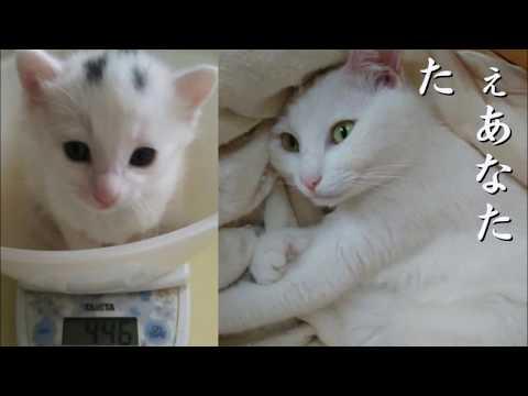 猫あるある川柳 ~ねぇあなた~ Vol.139