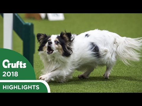 Isi & Dakota Steal the Show - Day 1 at Crufts 2018