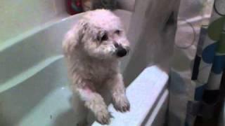 rocky s bath or wet putty dog qwik vid 6