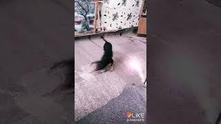Собака бегает за лазером?